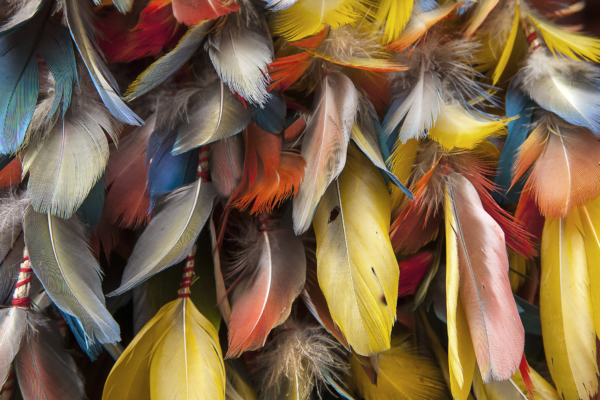 Plumes of color Fikry Botros