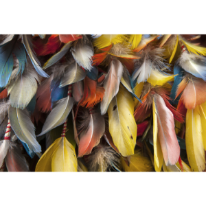 Plumes of color