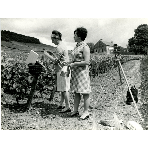 Willy Ronis Bourgogne